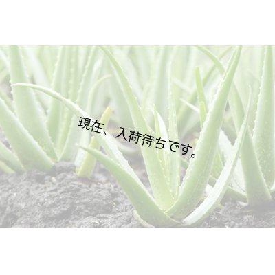 画像2: BIOキダチアロエ・ジェモレメディ・腸や消化器官、肝機能のケア 30ml (単体植物) Teo Natura / テオナチュラ