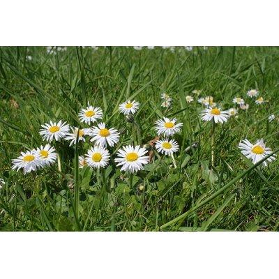 画像2: ヒナギク  エルビオリス BIO オイル 30mlx2本セット (スキンケアやバストケアに) Herbiolys