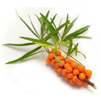 画像2: 【ジェモレメディ】BIOシーバックソーン(サジー)・ビタミンC補給、滋養強壮 50ml (単体植物) Herbiolys / エルビオリス