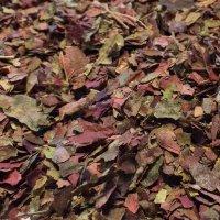 ヨーロッパブドウ葉 BIO メディカルハーブ・血液循環・むくみケア 100g Louis / ルイ