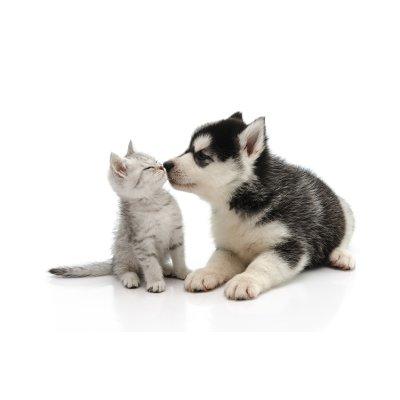 画像4: 犬猫用サプリメント・アンチコックスHDウルトラ 50錠 (ペットの関節、腱ケアに) Anibio / アニビオ