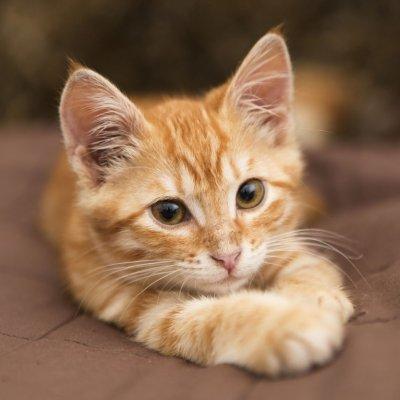 画像2: 猫用サプリメント・タウリン粉末タイプ 130g (糖尿病ケアや活力アップ) Anibio / アニビオ