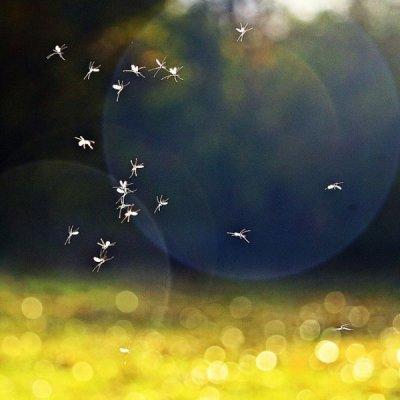 画像2: BIOプラナべべ 虫さされ鎮静ローラー ジェルタイプ  15ml Pranarom/プラナロム