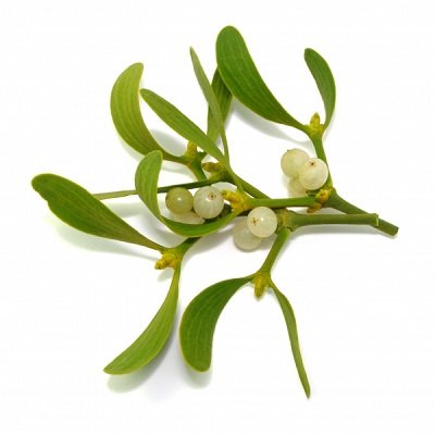 画像2: 【アルコール不使用・ジェモレメディ】BIOギィ(ヤドリギ) 高血圧、高コレステロール値のケアに 30ml (単体植物) Herbiolys / エルビオリス