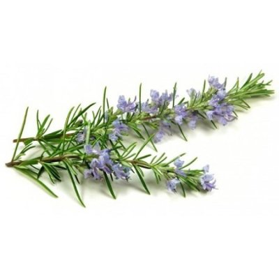 画像2: 【ジェモレメディ】BIOローズマリー・肝機能向上、デトックスに 50ml (単体植物) Herbiolys / エルビオリス