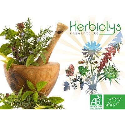 画像4: 【ジェモレメディ】BIOシラカバ・骨や関節の強化に 50ml (単体植物) Herbiolys / エルビオリス