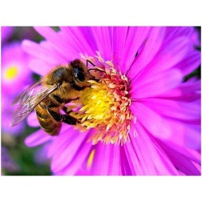 画像2: BIOプロポリス・ティンクチャー 免疫力アップ 50ml Herbiolys / エルビオリス