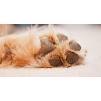 画像2: フィトバーム (犬猫などの怪我のケアに)100g Hilton Herbs / ヒルトンハーブ