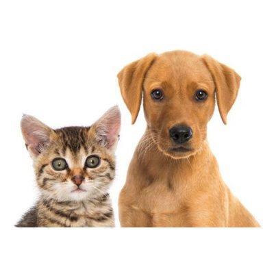 画像4: 犬猫用BIOサプリメント オオバコ300g (消化補助や減量に)  FLORALPINA / フロラルピナ