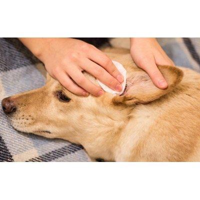 画像2: 犬猫用 ナチュラル点耳ローション (耳のケアに) 125ml Anibio / アニビオ