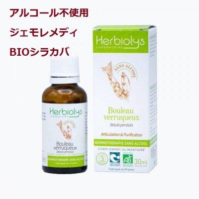 画像1: 【アルコール不使用・ジェモレメディ】BIOシラカバ 骨や関節の強化、肝臓保護に  30ml (単体植物) Herbiolys / エルビオリス