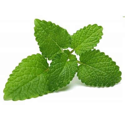 画像2: BIOメリッサ (レモンバーム) マザーティンクチャー リラックスや消化促進に 50ml Herbiolys / エルビオリス
