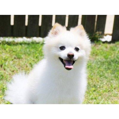 画像2: BIO犬猫向け固形シャンプー (白い毛向け) 60ml PEPET'S / ペペッツ