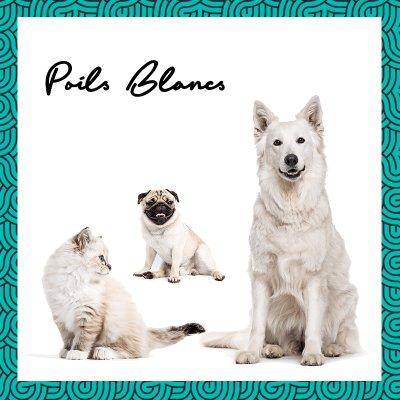 画像3: BIO犬猫向け固形シャンプー (白い毛向け) 60ml PEPET'S / ペペッツ