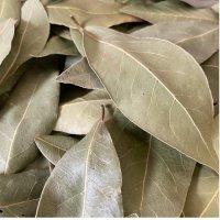 BIOローリエ (月桂樹) 葉全体 メディカルハーブ・去痰、殺菌作用 50g Louis / ルイ