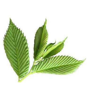 画像3: ジェモレメディ・ブレンド濃縮 ダーマジェム / 肌荒れ鎮静と回復力を高める  50ml・Herbal Gem / ハーバルジェム