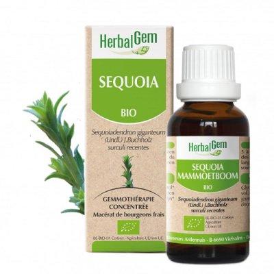 画像1: BIOジャイアント・セコイア ジェモレメディ・長寿、男性機能の向上に 50ml (単体植物) Herbalgem /ハーバルジェム
