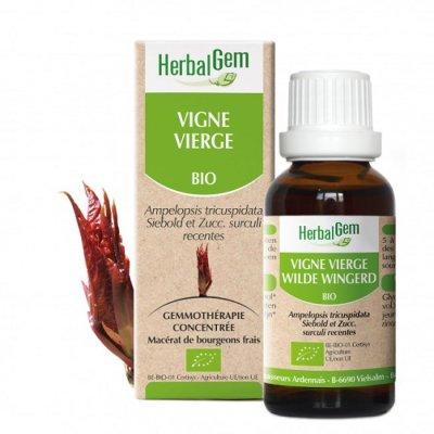 画像1: BIOアメリカヅタ・ジェモレメディ・関節痛やリウマチのケアに 50ml (単体植物) Herbalgem /ハーバルジェム